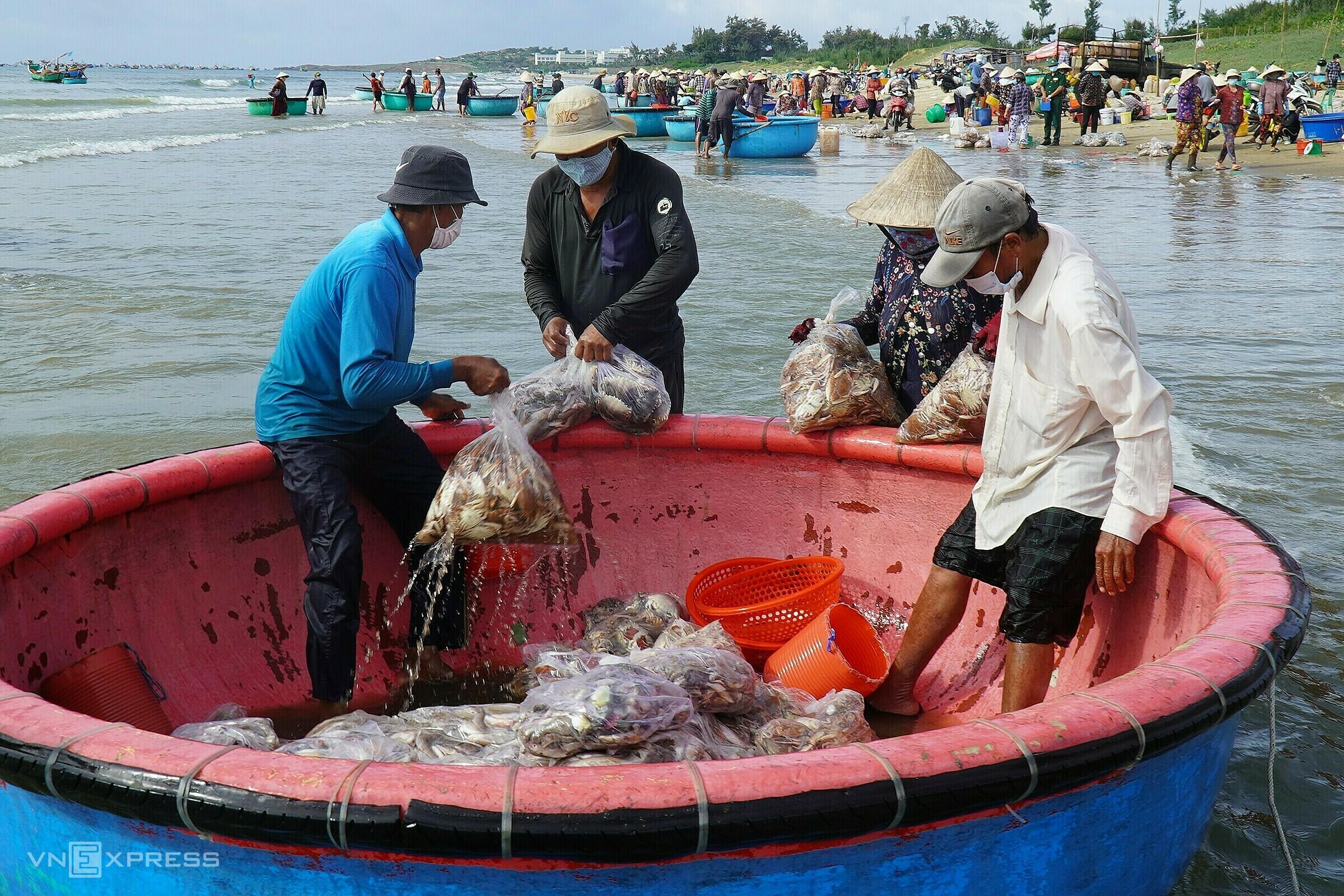 Thuyền thúng trung chuyển hải sản từ thuyền gỗ vào trong bờ Bãi Sau - Mũi Né, sáng 9/9. Ảnh: Việt Quốc