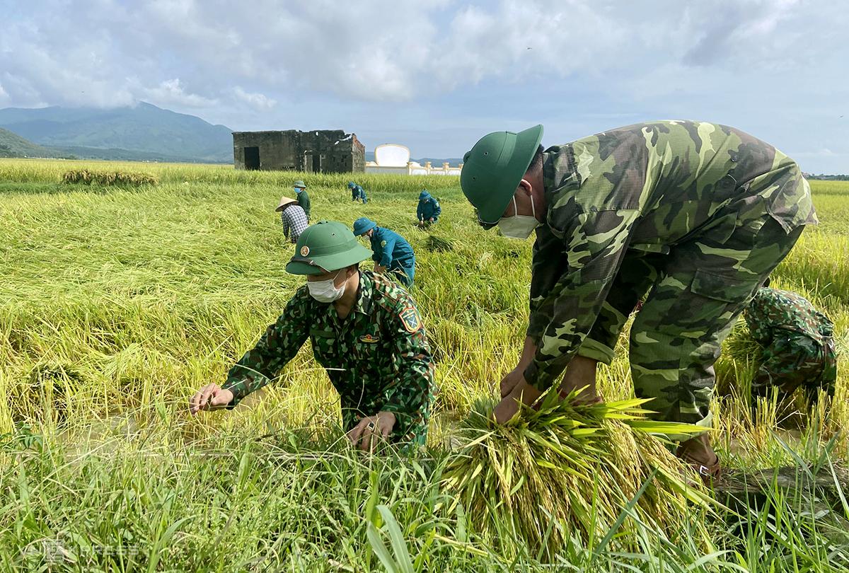 Bộ đội thu hoạch lúa bị đổ rạp giúp người dân xã Hồng Lộc, huyện Lộc Hà. Ảnh: Đức Hùng