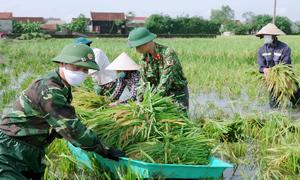 Công an, bộ đội giúp dân gặt lúa chạy bão Côn Sơn
