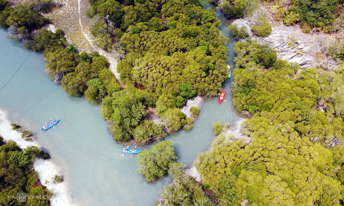 Du khách trải nghiệm chèo thuyền Kayak tham quan rừng ngập mặn trên đảo ở Nha Trang, hồi tháng 3. Ảnh: Xuân Ngọc.