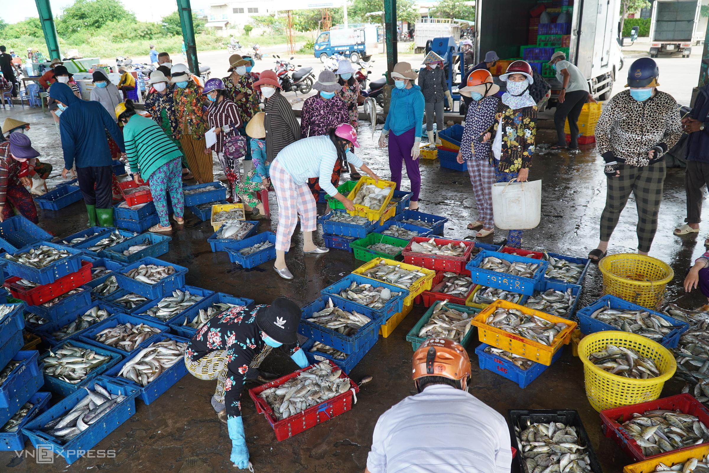 Người đi mua hải sản đang đứng nhìn, chọn cá trong cảng Phú Hài. Ảnh: Việt Quốc