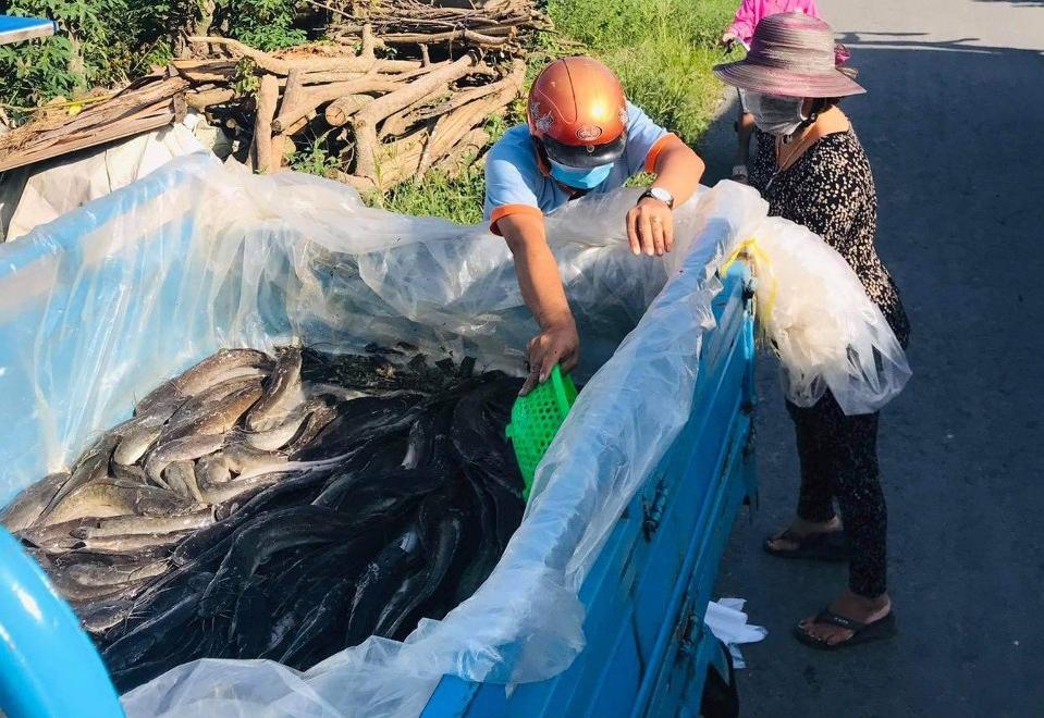 Xe chở cá trê đi khắp các tuyến đường trong xã Long Khánh B và một phần xã lân cận để phân chia cá cho người dân. Ảnh: Tú Nguyễn