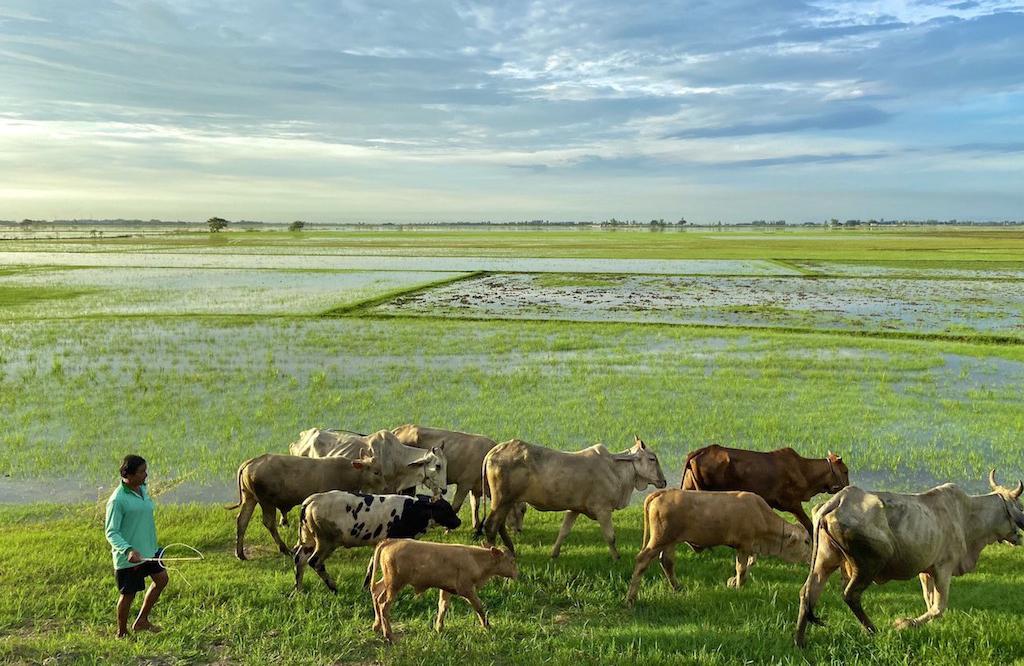 Các cánh đồng tại huyện Hồng Ngự, tỉnh Đồng Tháp nước chỉ xăm xắp dù đã sang tháng 8 âm lịch. Ảnh: ConTuSa
