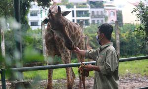 Chăm sóc thú mùa dịch trong Thảo Cầm Viên