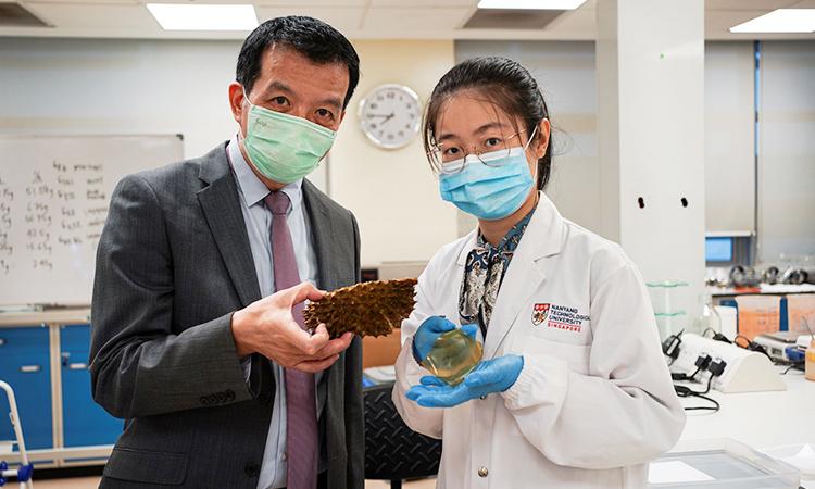 Giáo sư William Chen (trái) và Tiến sĩ Tracy Cui, các tác giả của nghiên cứu. Ảnh: Reuters
