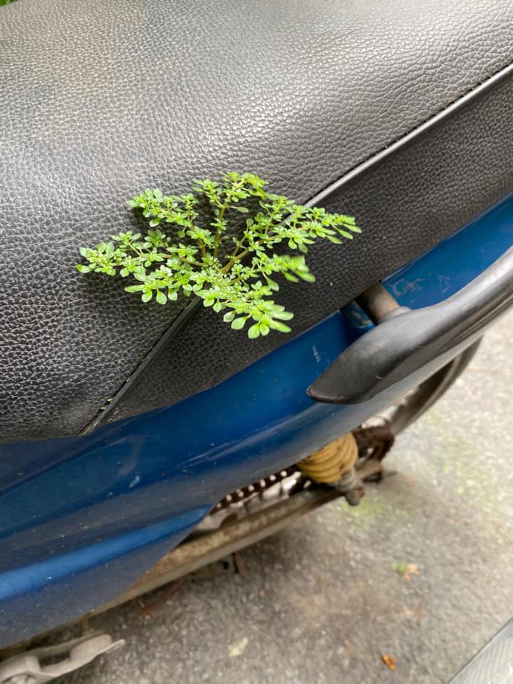 Yên xe đã có cây xanh phủ bóng.