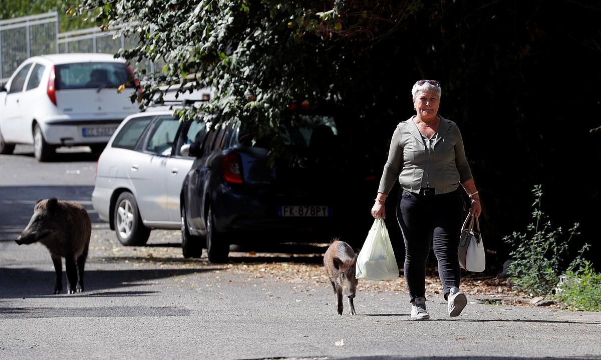 Một người phụ nữ bị lợn rừng bám đuôi trên đường phố Rome ngày 22/9. Ảnh: Reuters