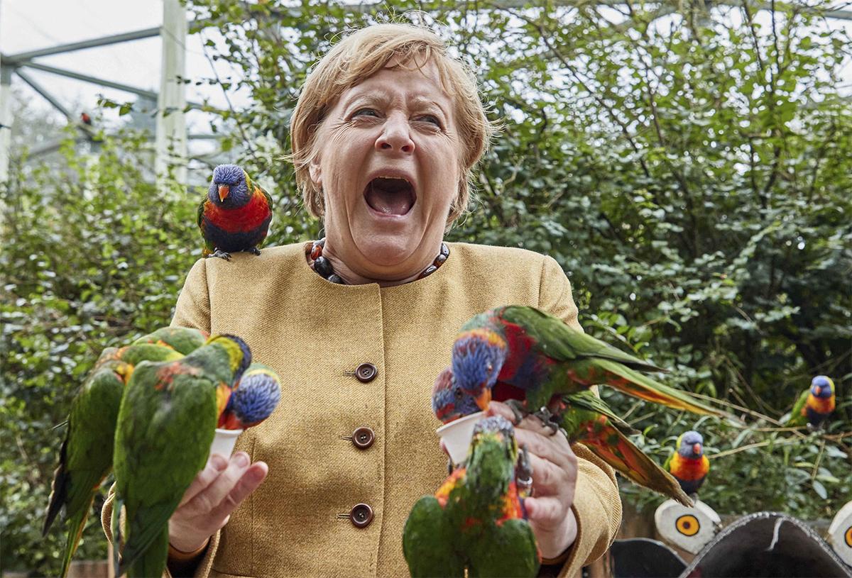 Khoảnh khắc bà Merkel kêu lên vì bị vẹt mổ khi thăm công viên ở Marlow, Đức ngày 23/9. Ảnh: AP.