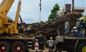 Di dời cây đa nặng 120 tấn chắn ngang đường