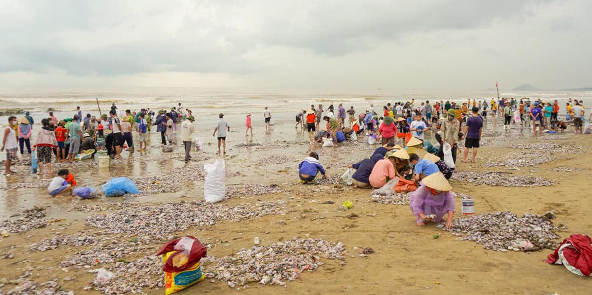 Hàng trăm người tập trung tại bãi biển thị xã Hoàng Mai nhặt ngao, sáng nay. Ảnh: CTV