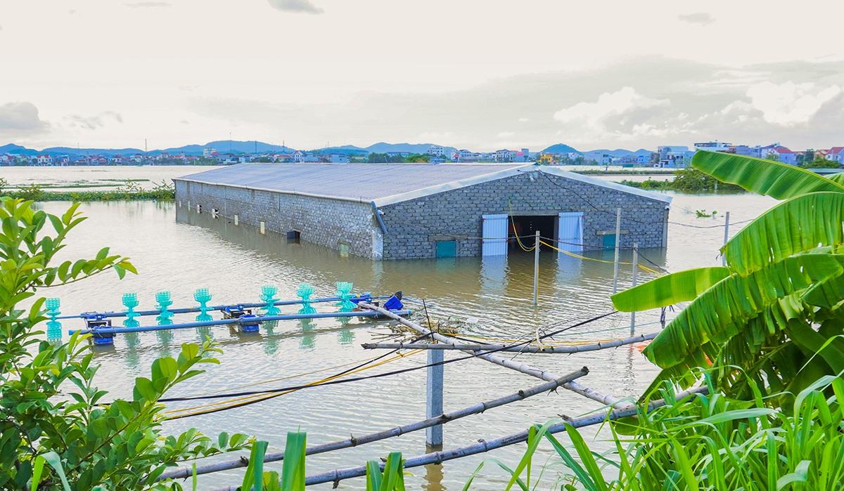 Đầm nuôi tôm ở xã Quỳnh Bá (huyện Quỳnh Lưu) bị nước ngập băng, chiều 26/9. Ảnh: Hồ Định