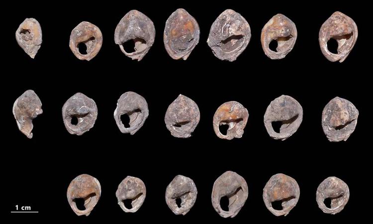 Vỏ ốc dùng làm trang sức cổ xưa nhất thế giới trong hang ở Morocco. Ảnh: A. Bouzouggar/Science Advances