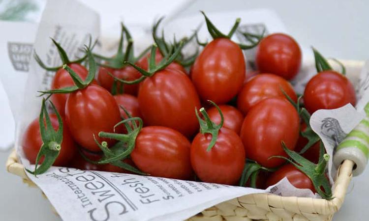 Cà chua ứng dụng công nghệ chỉnh sửa gene CRISPR được bán tại Nhật Bản. Ảnh: Sanatech Seed