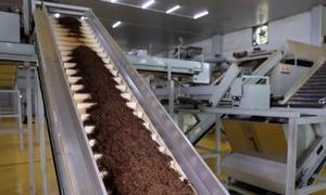Ứng dụng trí tuệ nhân tạo sản xuất trà
