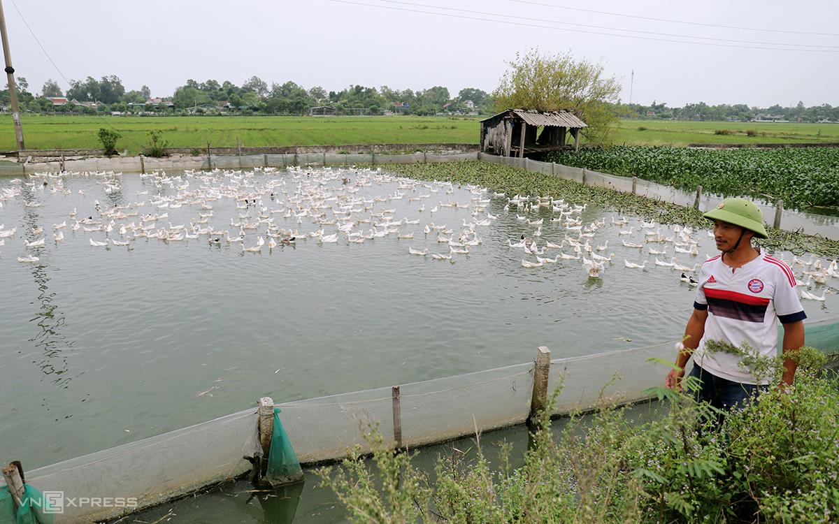 Anh Trường đi kiểm tra trang trại nuôi vịt ở thôn Bắc Văn, xã Thạch Văn. Ảnh: Đức Hùng
