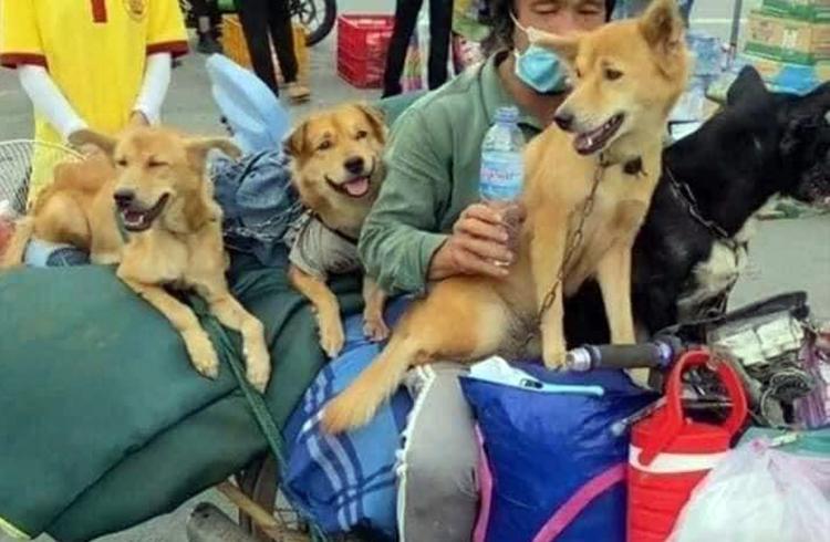 Đàn chó của ông Hùng trên đường về Cà Mau hôm 8/10. Ảnh: Facebook