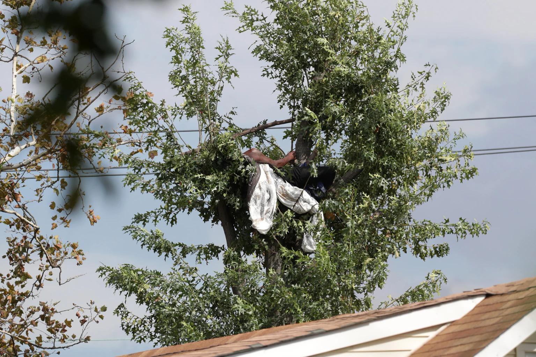Thomas leo lên cây bên ngoài ngôi nhà anh ta sống cùng mẹ trên Đại lộ 145 ở Jamaica, Queens, New York. Ảnh: NYPost