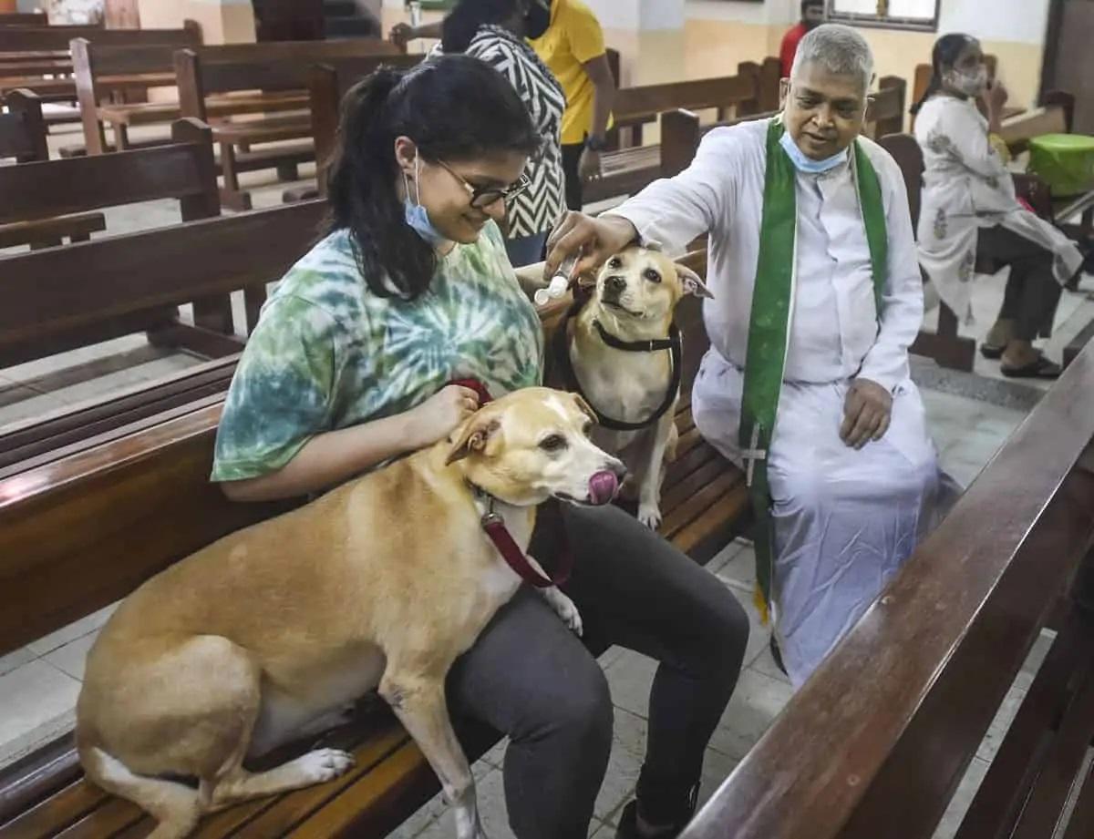 Cha Joe Dsouza vẩy nước thánh lên người hai con chó cưng trong nhà thờ Evangelist hôm 10/10. Ảnh: PTI