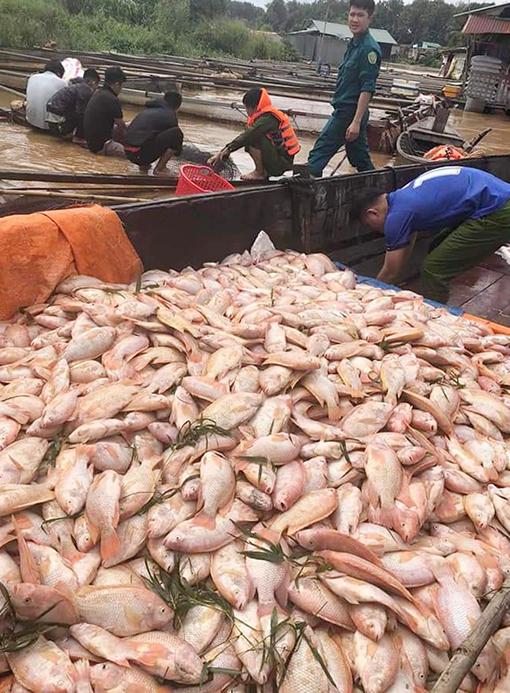 800 tấn cá bè chết trên sông Đồng Nai - 1