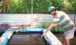 Trại ươm cá cảnh 2.000 m2 ở miền Tây