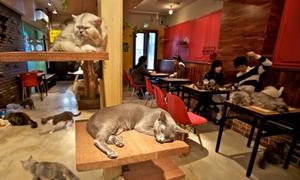 Uống cafe mèo ở Madrid